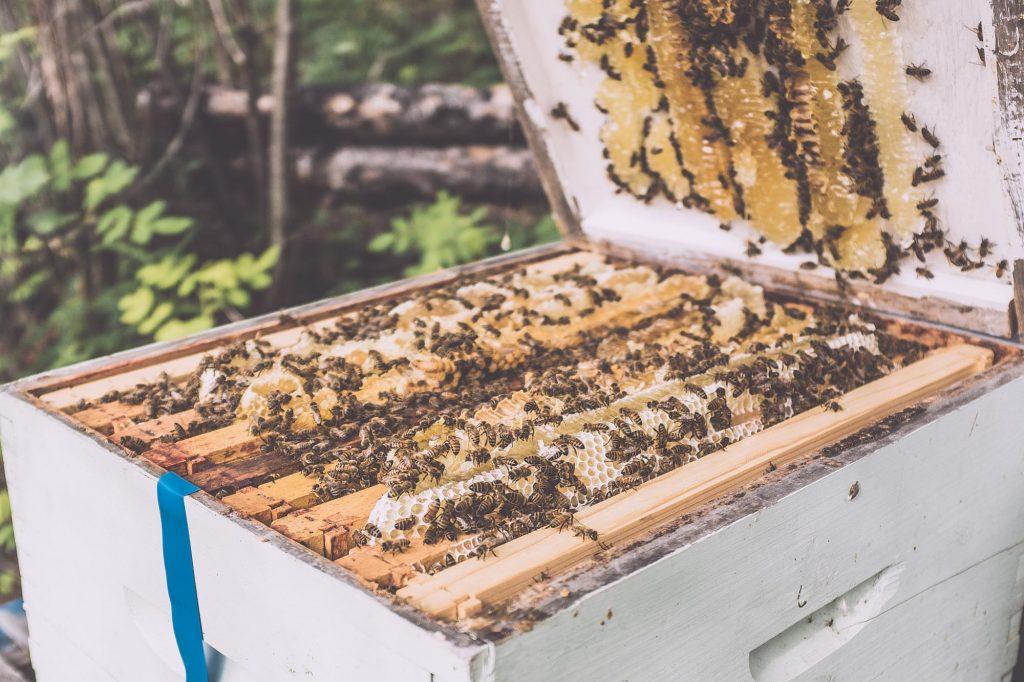 Yellowknife Beehives